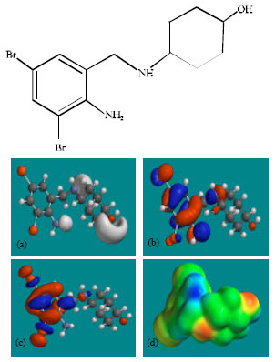 Image for - Molecular Modelling Analysis of the Metabolism of Ambroxol
