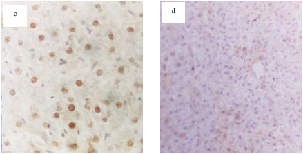 Image for - Protective Effects of Propolis Against the Amitraz Hepatotoxicity in Mice