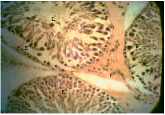 Image for - Rhodinol-based Incense Testiculotoxicity in Albino Rats: Testicular Histology, Spermatogenic and Biochemical Evaluations
