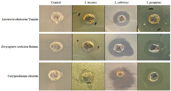 Image for - Anti-bacterial Effect of Marine Algae against Oral-borne Pathogens