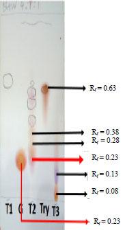 Image for - Membrane Stabilization Activity of Amino Acids Rich Chromatography Fractions from Pleurotus pulmonarius (Fr.) Quel. (Pleurotaceae)