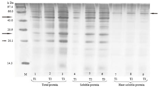 Image for - Biochemical Changes Due to Seed Priming in Maize Hybrid COH(M) 5