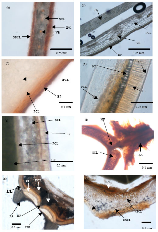 Image for - Variation in Seed Dormancy and Storage Behavior of Three Liana Species of Derris (Fabaceae, Faboideae) in Sri Lanka and Ecological Implications