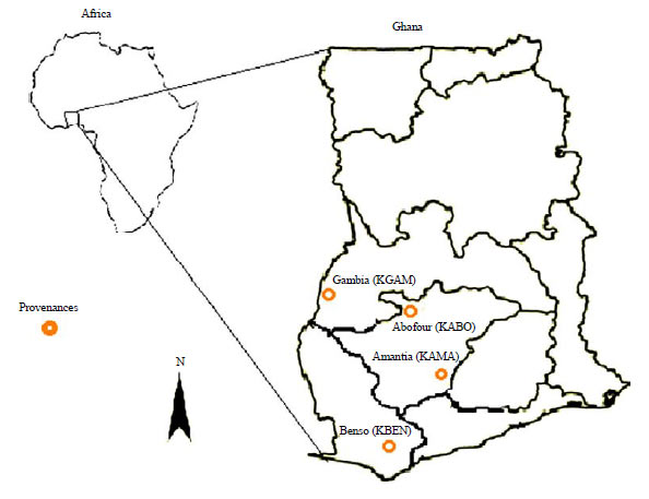 Image for - Accelerated Ageing Tests of Nauclea diderrichii Seeds: Evaluating Seed Vigour from Different Forest Provenances to Aid Plus-trees Selection in Ghana