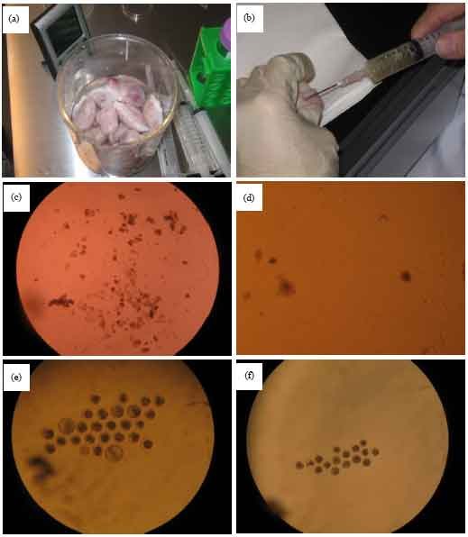 Image for - Approaching Insights to in vitro Production of Bovine Embryos and the Growth Rate to Blastocyst