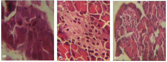 Image for - Prevention of Alloxan Induced Diabetes Mellitus in Rats by Vitamin a Dietary Supplementation