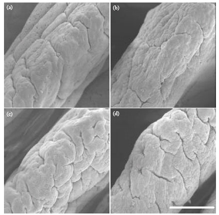 Image for - Growth Performance and Histological Alterations of Intestinal Villi in Broilers Fed Dietary Mixed Minerals