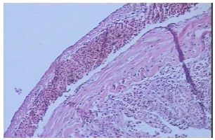 Image for - A Pathological Study of Rainbow Trout Organs Naturally Infected with Enteric Redmouth Disease