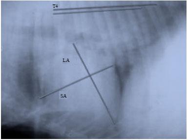 Image for - Pericardial Effusion in a Labrador Retriever Dog