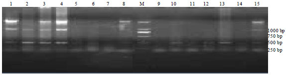 Image for - Application of Sequence-Characterized Amplified Regions to the Detection of Self-biting Behavior in the Blue Fox