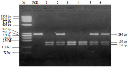 Image for - Sequence Analysis and Identification of Allele Distribution of Melanocortin 1 Receptor (MC1R) Gene in Indonesian Cattle (Bos sondaicus×Bos indicus)