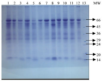 Image for - Influence of Salinity on Lipid Peroxidation, Antioxidant Enzymes and Electrophoretic Patterns of Protein and Isoenzymes in Leaves of Some Onion Cultivars