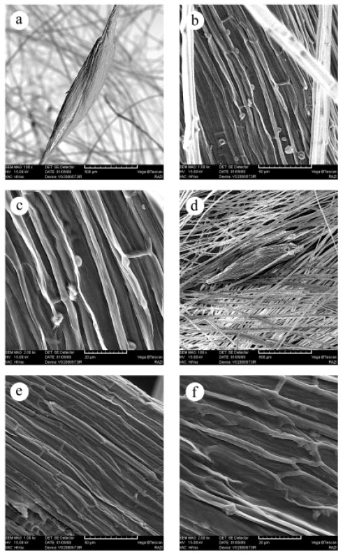 Image for - Revision of Study of Typha Genus: Three New Records Species of the Genus    Typha (Typhaceae) in Iran and Their Micromorphological Pollen and Capsule    Studies