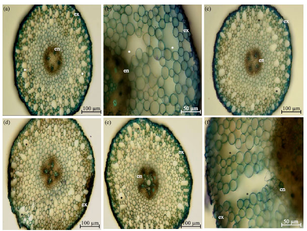 Image for - Effect of Different Waterlogging Regimes on Growth, Some Yield and Roots Development Parameters in Three Fiber Crops (Hibiscus cannabinus L., Hibiscus sabdariffa L. and Corchorus olitorius L.)