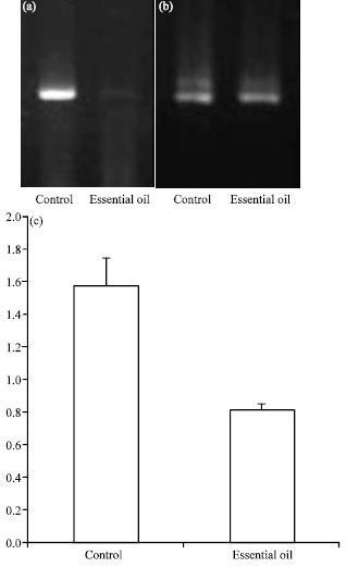 Image for - Role of Zataria multiflora Boiss. Essential oil in Regulation of MDM2 and ATM Genes Expression in Rat