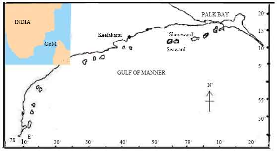 Image for - Distribution and Spatial Variation of Seagrass in the Northern Part of Gulf of Mannar, Southeastern India