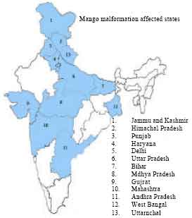 Image for - Current Status of Mango Malformation in India
