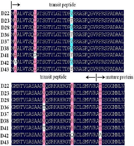 Image for - Molecular Characterization of Waxy Gene in Aegilops tauschii