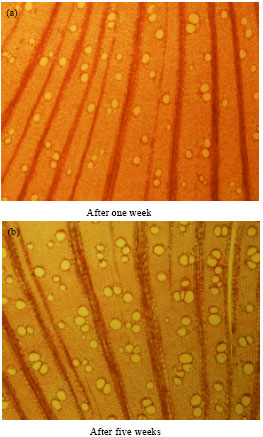 Image for - Growth Characteristics and Some Wood Quality of Tamarix aphylla    Seedlings Irrigated with Primary Treated Wastewater under Drought Stress