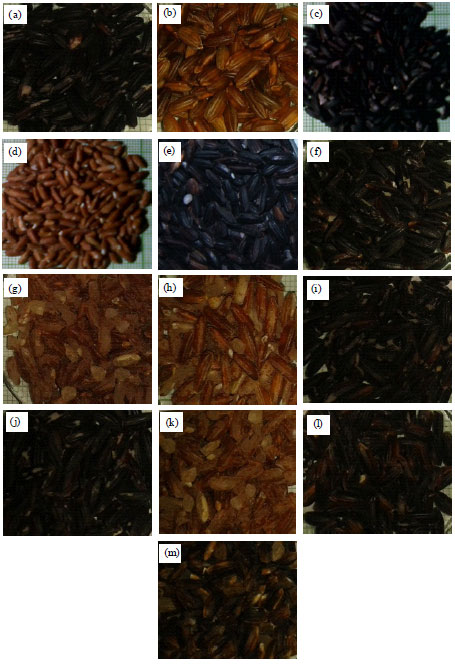 Image for - Physicochemical Properties of Indonesian Pigmented Rice (Oryza sativa Linn.) Varieties from South Sulawesi