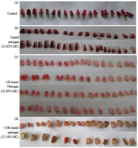 Image for - Utilization of Sago Palm (Metroxylon sagu Rottb.) Zygotic Embryos for Cryopreservation
