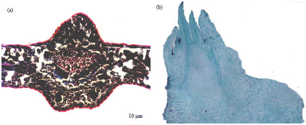 Image for - Comparison of Adventitious Shoot Formation of Garcinia mangostana via Embryogenesis and Direct Organogenesis