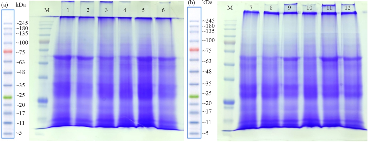 Image for - Determination of Genetic Parameters Associated with Salt Stress Tolerance in Canola Based on SCoT Markers and Protein Pattern Analysis