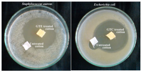 Image for - Antibacterial Cotton Finish Using Green Tea Leaf Extracts Interacted with Copper