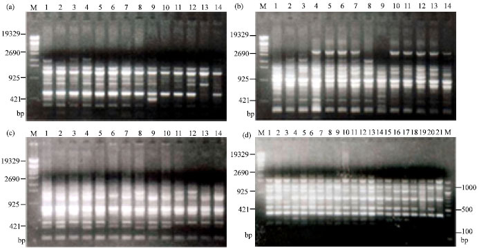 Image for - Analysis of Genetic Diversity in Bangladeshi Chicken using RAPD Markers