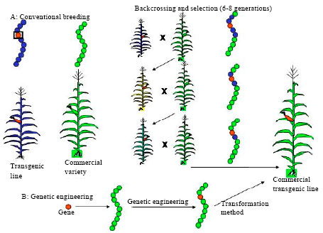 Image for - Genetically by Modified Crops: An Overview