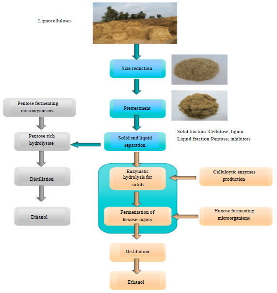 Image for - Bioethanol Production from Lignocellulosic Feedstocks Based on Enzymatic Hydrolysis:    Current Status and Recent Developments