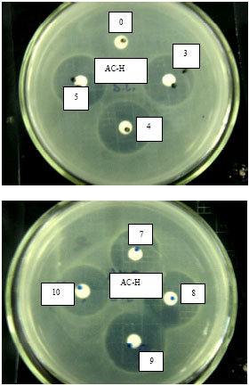 Image for - The Antibiotic Potency of Amoxicillin-Clavulanate Co-Crystal