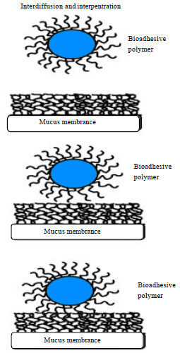 Image for - An Exhaustive Review on Recent Advancement in Pharmaceutical Bioadhesive Used for Systemic Drug Delivery Through Oral Mucosa for Achieving Maximum Pharmacological Response and Effect