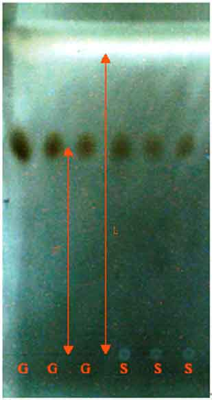 Image for - Extraction of Polysaccharides from Saccharomyces cerevisiae and its Immune Enhancement Activity