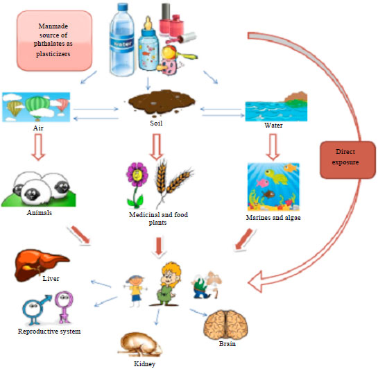 Image for - Consumption of Phthalates Coated Pharmaceutical Tablets: An Unnoticed Threat