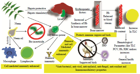 Image for - Multiple Beneficial Applications and Modes of Action of Herbs in Poultry Health and Production-A Review