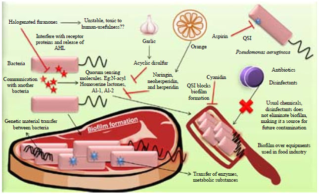 Image for - Quorum Sensing Inhibitors/antagonists Countering Food Spoilage Bacteria-need Molecular and Pharmaceutical Intervention for Protecting Current Issues of Food Safety