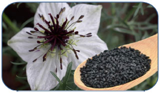 Image for - Nutritional, Healthical and Therapeutic Efficacy of Black Cumin (Nigella sativa) in Animals, Poultry and Humans