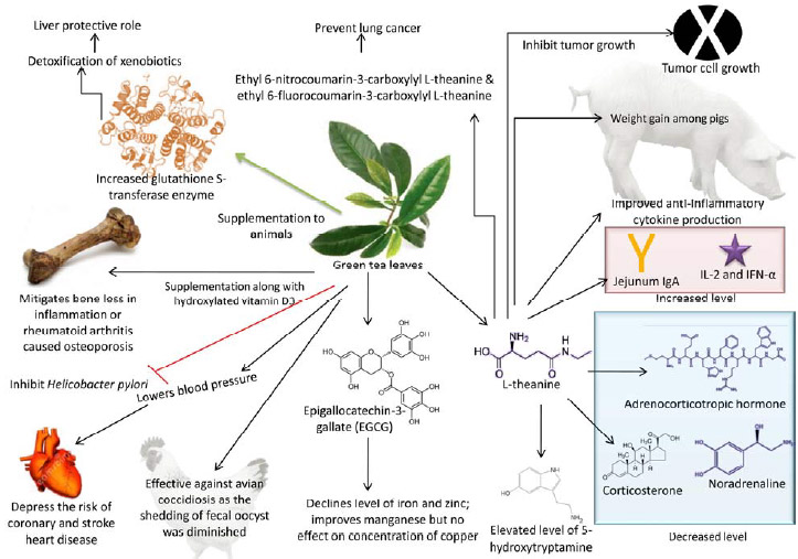 Image for - Phytochemistry, Modes of Action and Beneficial Health Applications of Green Tea (Camellia sinensis) in Humans and Animals