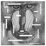 Image for - A Robust Wavelet-based Blind Digital Watermarking Algorithm
