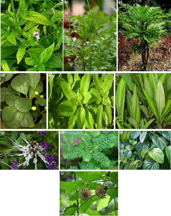 Image for - Bioactive Compound and Therapeutic Value of the Some Malaysia Medicinal Plants: A Review