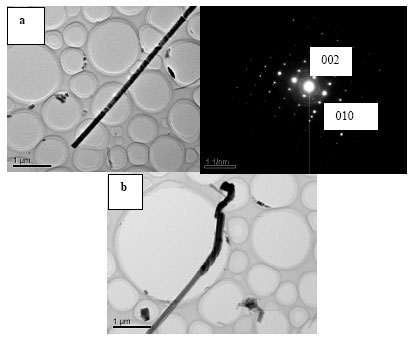Image for - Growth and Photoluminescence of Single Crystal ZnS Nanowires