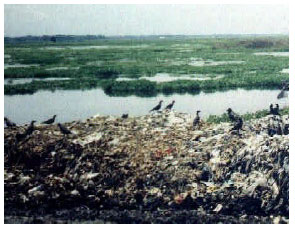 Image for - Domestic Waste Disposal Practice of Sylhet City