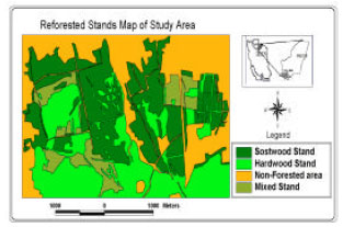 Image for - Up to Date Mapping of Reforested Area Using Multi-Dates ETM+Data