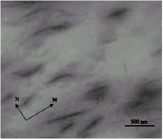 Image for - Review of Polymer-Organoclay Nanocomposites