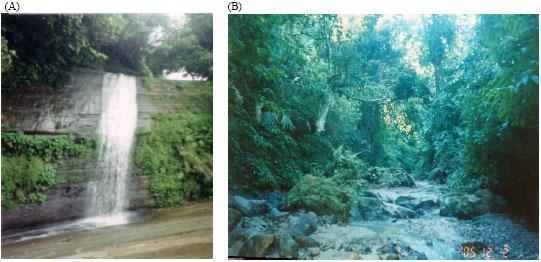 Image for - A Feasibility Study of Micor-Hydroelectric Power Generation at Sapchari          Waterfall, Khagrachari, Bangladesh