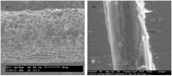 Image for - Influence of Alkaline and Enzymatic Treatments on the Properties          of Doum Palm Fibres and Composite