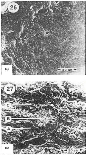 Image for - A Review on Hydraulic Conductivity and Compressibility of Peat