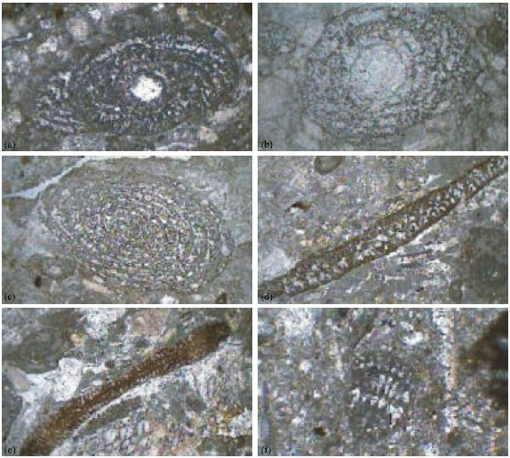 Image for - Microbiostratigraphy of the Tarbur Formation, Zagros Basin, Iran