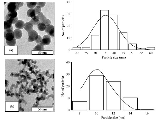 Image for - Effect of Fe Doping on Phase Transition of TiO2 Nanoparticles Synthesized by MOCVD